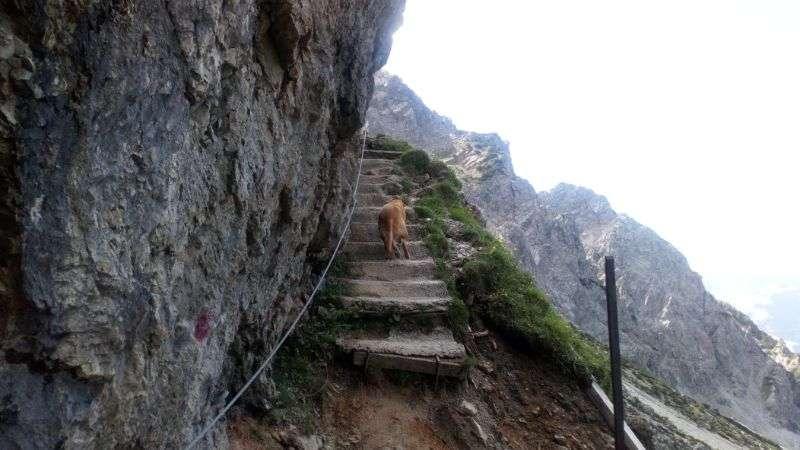 Riemannhaus hike stony steps